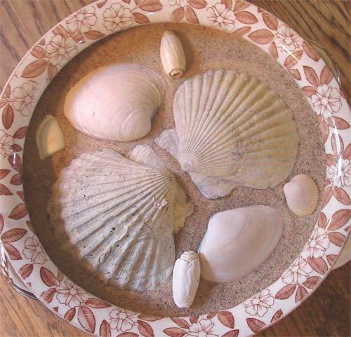 shellbowl