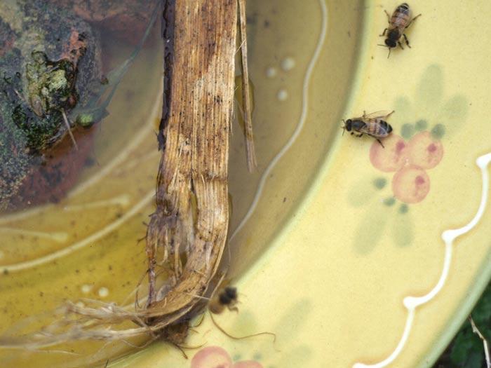 beeswellclose