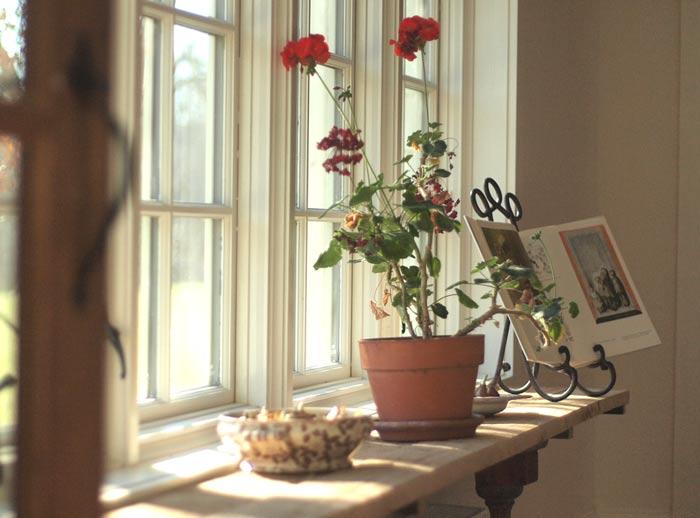 geraniumsbulbsbook