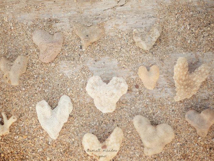 sea-hearts